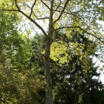 Pruning - Bridgetown Tree Service