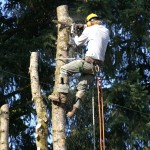 Removal - Bridgetown Tree Service